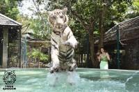 คุ้มเสือแม่ริม จังหวัดเชียงใหม่